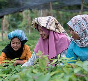 Photo of women working in rice fields