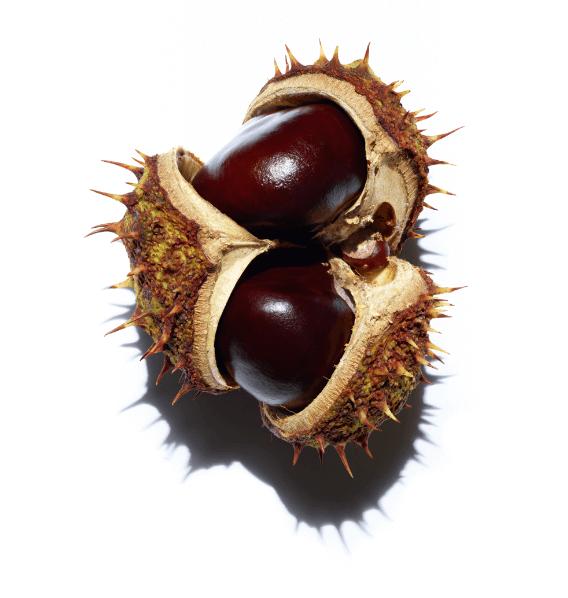 Horse chestnut escin